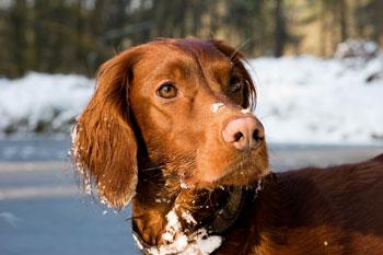 hunde-weimar