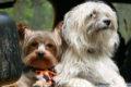 Hundetransportboxen für Reisen – So reist dein Hund sicher