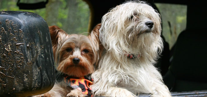 Hundetransportboxen für Reisen